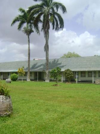 uitzicht op palmbomen